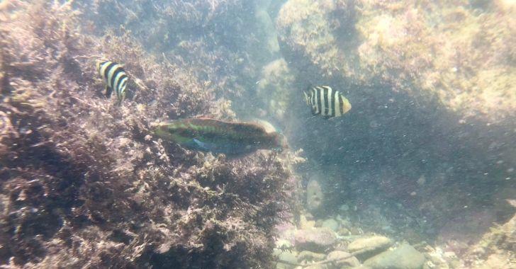 小磯の鼻の魚の画像