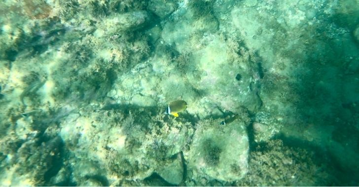 葉山一色海岸の魚