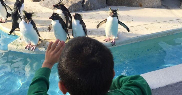 油壺マリンパークのペンギン