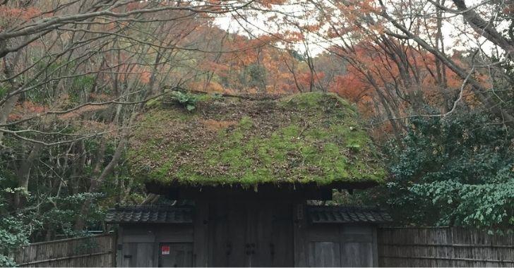 茅山荘の紅葉