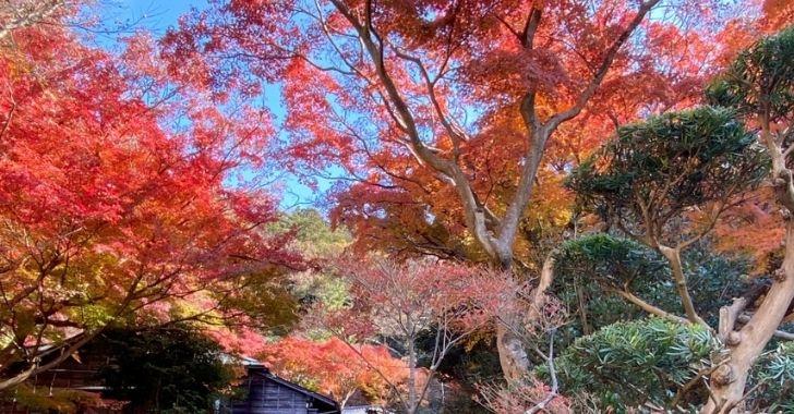 蘆花記念公園の紅葉