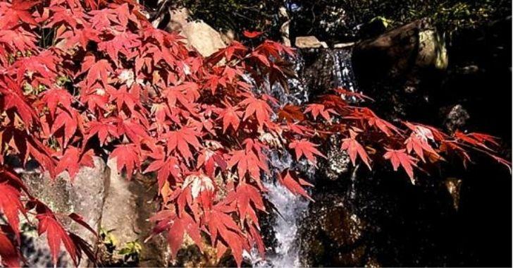 葉山しおさい公園の紅葉
